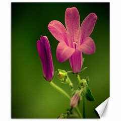 Campanula Close Up Canvas 20  X 24  (unframed) by Siebenhuehner