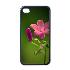 Campanula Close Up Apple Iphone 4 Case (black) by Siebenhuehner