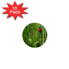 Ladybird 1  Mini Button Magnet (10 Pack) by Siebenhuehner