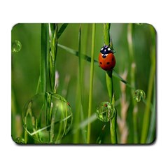 Ladybird Large Mouse Pad (rectangle) by Siebenhuehner