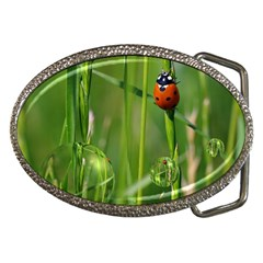 Ladybird Belt Buckle (Oval) by Siebenhuehner
