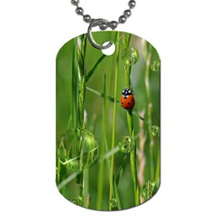 Ladybird Dog Tag (one Sided) by Siebenhuehner
