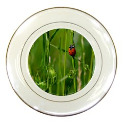 Ladybird Porcelain Display Plate by Siebenhuehner