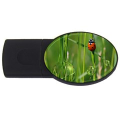Ladybird 4gb Usb Flash Drive (oval) by Siebenhuehner