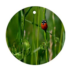 Ladybird Round Ornament (two Sides) by Siebenhuehner