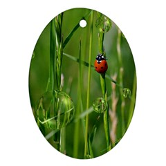 Ladybird Oval Ornament (two Sides) by Siebenhuehner