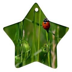Ladybird Star Ornament (two Sides) by Siebenhuehner