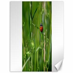 Ladybird Canvas 36  X 48  (unframed) by Siebenhuehner