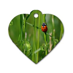 Ladybird Dog Tag Heart (one Sided)  by Siebenhuehner