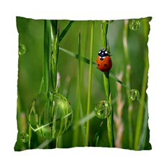 Ladybird Cushion Case (single Sided)  by Siebenhuehner