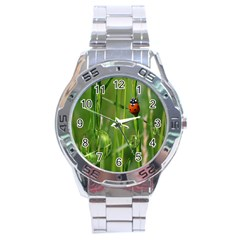 Ladybird Stainless Steel Watch (men s) by Siebenhuehner
