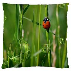 Ladybird Large Cushion Case (single Sided)  by Siebenhuehner