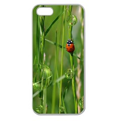 Ladybird Apple Seamless Iphone 5 Case (clear) by Siebenhuehner