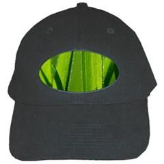 Grass Black Baseball Cap by Siebenhuehner