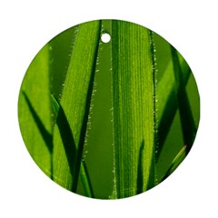 Grass Round Ornament (two Sides) by Siebenhuehner