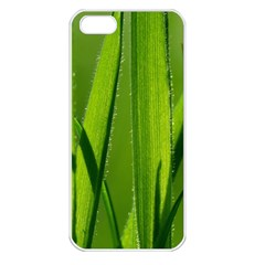 Grass Apple Iphone 5 Seamless Case (white) by Siebenhuehner