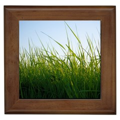 Grass Framed Ceramic Tile by Siebenhuehner