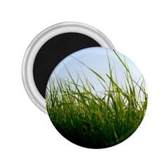 Grass 2 25  Button Magnet by Siebenhuehner