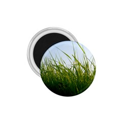 Grass 1 75  Button Magnet by Siebenhuehner