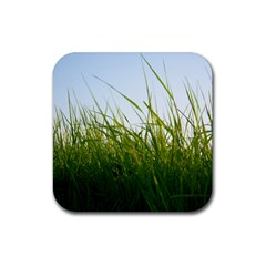 Grass Drink Coasters 4 Pack (square) by Siebenhuehner