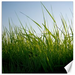 Grass Canvas 16  X 16  (unframed) by Siebenhuehner