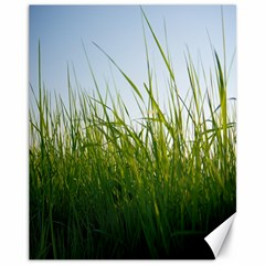 Grass Canvas 11  X 14  (unframed) by Siebenhuehner