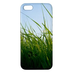Grass Iphone 5 Premium Hardshell Case by Siebenhuehner