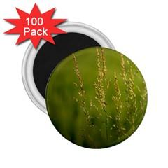 Grass 2 25  Button Magnet (100 Pack) by Siebenhuehner