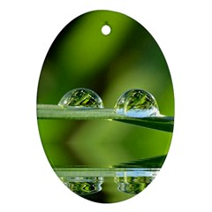 Waterdrops Oval Ornament by Siebenhuehner