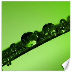 Green Drops Canvas 12  X 12  (unframed) by Siebenhuehner
