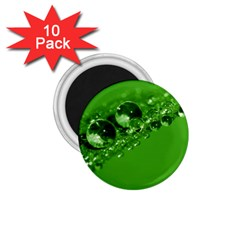 Green Drops 1.75  Button Magnet (10 pack)