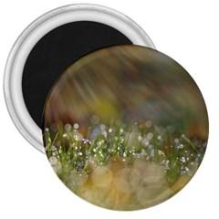 Sundrops 3  Button Magnet by Siebenhuehner
