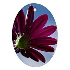 Daisy Oval Ornament by Siebenhuehner