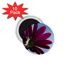 Daisy 1 75  Button Magnet (10 Pack) by Siebenhuehner