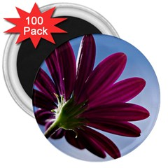 Daisy 3  Button Magnet (100 Pack) by Siebenhuehner