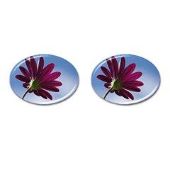 Daisy Cufflinks (oval) by Siebenhuehner