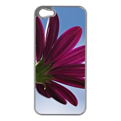 Daisy Apple Iphone 5 Case (silver) by Siebenhuehner