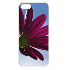 Daisy Apple Iphone 5 Seamless Case (white) by Siebenhuehner