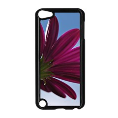 Daisy Apple Ipod Touch 5 Case (black) by Siebenhuehner