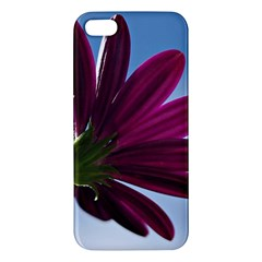 Daisy Iphone 5s Premium Hardshell Case