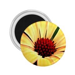 Osterspermum 2 25  Button Magnet by Siebenhuehner