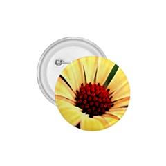 Osterspermum 1 75  Button by Siebenhuehner