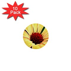 Osterspermum 1  Mini Button (10 Pack) by Siebenhuehner