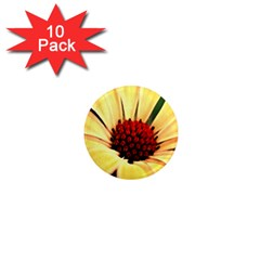Osterspermum 1  Mini Button Magnet (10 Pack) by Siebenhuehner