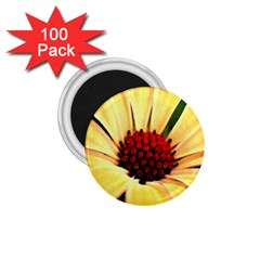 Osterspermum 1 75  Button Magnet (100 Pack) by Siebenhuehner