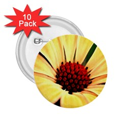 Osterspermum 2 25  Button (10 Pack) by Siebenhuehner