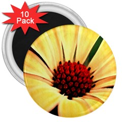 Osterspermum 3  Button Magnet (10 Pack) by Siebenhuehner