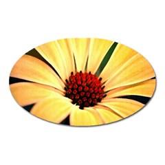 Osterspermum Magnet (oval) by Siebenhuehner