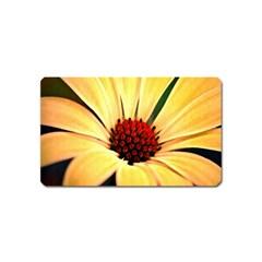 Osterspermum Magnet (name Card) by Siebenhuehner