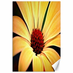 Osterspermum Canvas 12  X 18  (unframed)